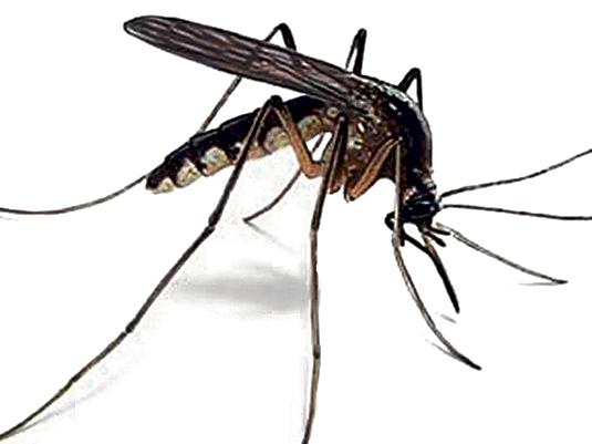 Vérszívó rovarok és a párafüggöny